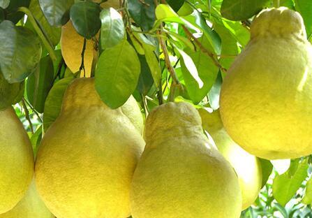 糖尿病能吃什么水果 合适糖尿病人吃的10种水果